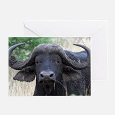 buffalo panel Greeting Card