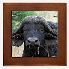 buffalo panel Framed Tile