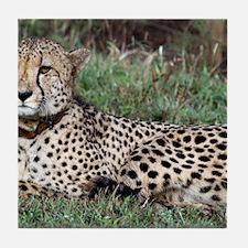 cheetah panel Tile Coaster