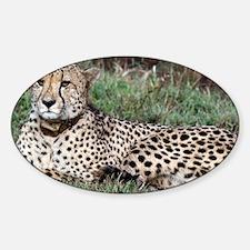 cheetah panel Decal