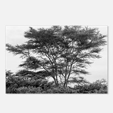 tree card Postcards (Package of 8)
