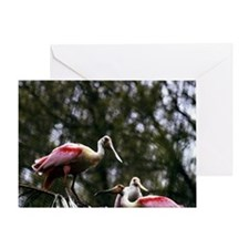 A Group of Roseate Spoonbills Greeting Card