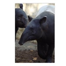 Two Malayan Tapirs Postcards (Package of 8)
