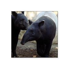 "Two Malayan Tapirs Square Sticker 3"" x 3"""