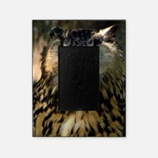 A Bengalese Eagle Owl Picture Frame