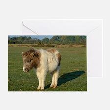 Shetland pony notecard 2 Greeting Card