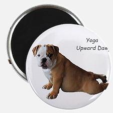 Bulldog in yoga pose Magnets