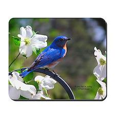 Bluebird & Dogwood