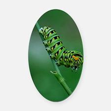 caterpillar Oval Car Magnet