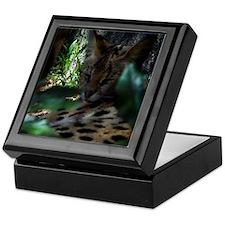 A sleeping Serval Keepsake Box