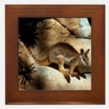 A Yellow-Footed Rock Wallaby Framed Tile