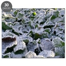 frosted ivy Puzzle