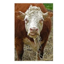 Miniature Hereford Postcards (Package of 8)