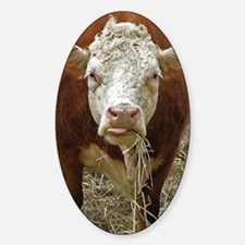Miniature Hereford Sticker (Oval)