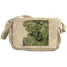Catalpa Tree Messenger Bag