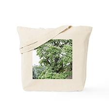 Catalpa Tree Tote Bag
