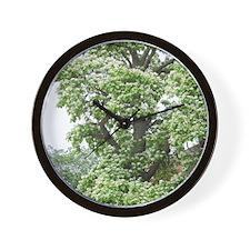 Catalpa Tree Wall Clock