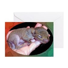 Baby Squirrel Greeting Cards (Pk of 10)