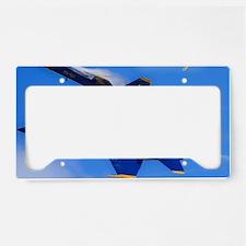 Blues_0142.23x35.final License Plate Holder