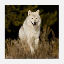 white wolf 10by Tile Coaster