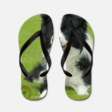 Border Collie 9A015D-10_2 Flip Flops