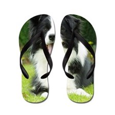 Border Collie 9A014D-14 Flip Flops