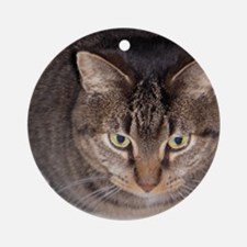 Snuggle Round Ornament