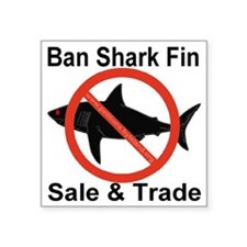 "no_shark_fin Square Sticker 3"" x 3"""