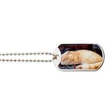 persian cat Dog Tags
