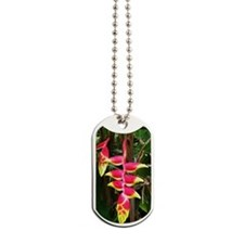 Costa_Rica_BOP_iTouch Dog Tags
