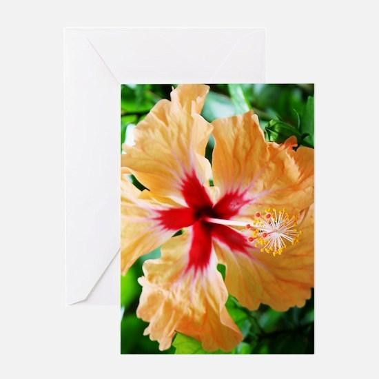 Costa_Rica_Hibiscus_iPad Greeting Card