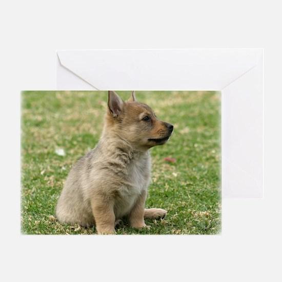 Swedish Vallhund Pup 9Y165D-131 Greeting Card