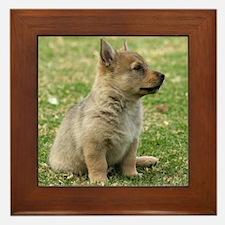 Swedish Vallhund Pup 9Y165D-131 Framed Tile