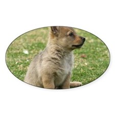 Swedish Vallhund Pup 9Y165D-131 Decal