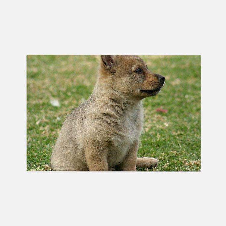 Swedish Vallhund Pup 9Y165D-131 Rectangle Magnet