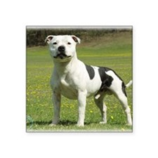 "Staffordshire Bull Terrier  Square Sticker 3"" x 3"""