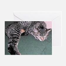 Napping Cat PI Greeting Card