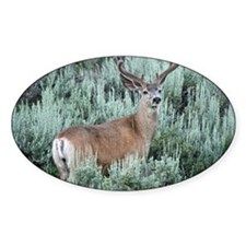 Mule deer buck Decal
