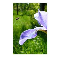 IRis2.41x4.42 Postcards (Package of 8)
