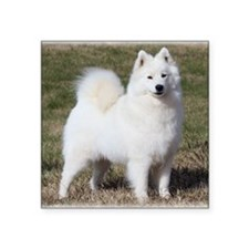 "Samoyed 9Y602D-014 Square Sticker 3"" x 3"""