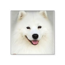 "Samoyed 9Y566D-019 Square Sticker 3"" x 3"""