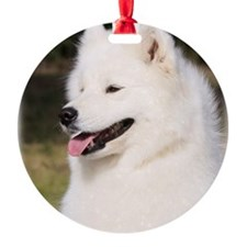 Samoyed 9Y602D-127 Ornament