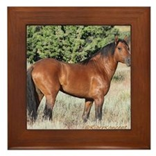 Kiger Stallion Framed Tile