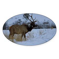 Winter Bull Decal