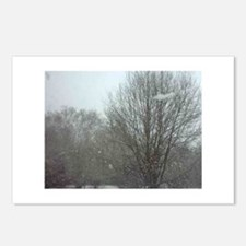 Snowy Trees Postcards (Package of 8)