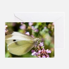 butterfly-butterfly-bush Greeting Card