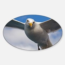 seagull-2 Decal