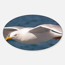seagull-3 Decal
