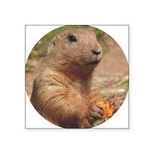 "prairie dog rnd Square Sticker 3"" x 3"""