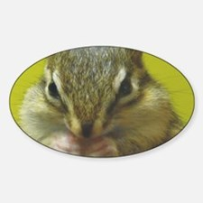 chipmunk larg Sticker (Oval)